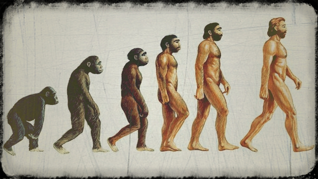 evolucion_humana_2